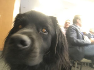 Out of focus photo of a black service dog